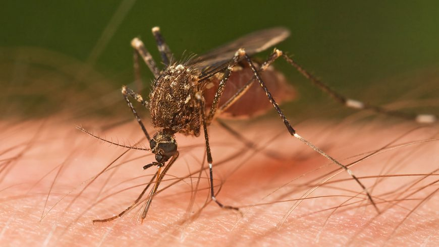Most Common Types Of Mosquitoes