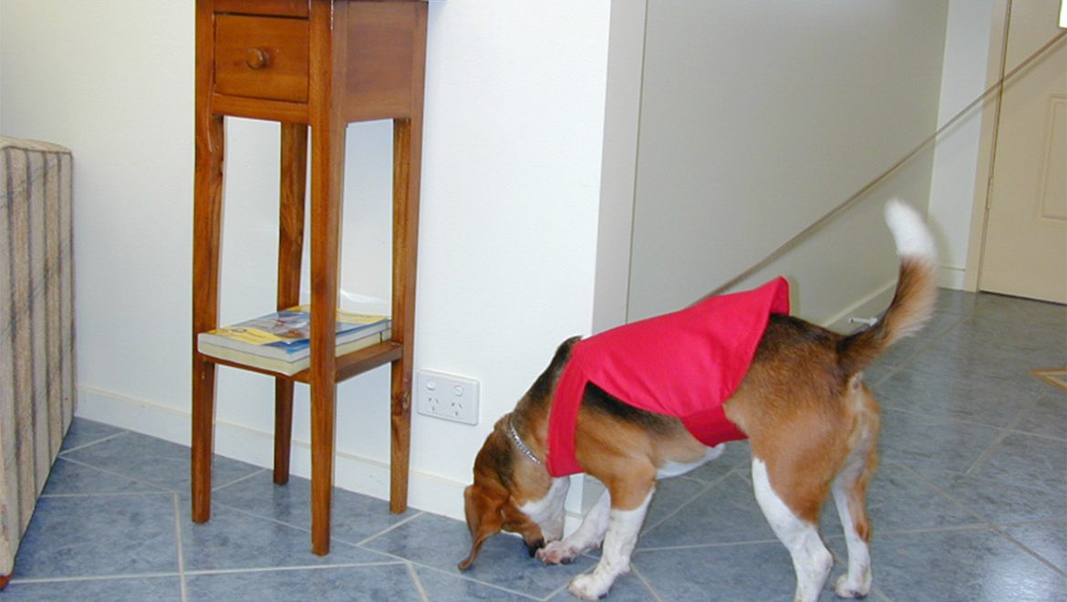 More than Just a Man's Best friend: Bed Bug Detection Dog