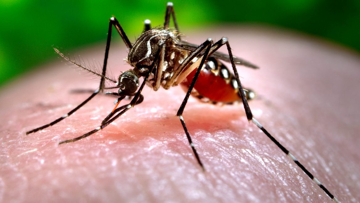 Dengue Cases in Singapore is on the Rise