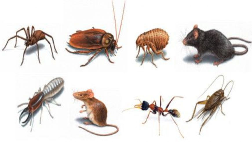 Why the need to remove pests in Singapore?