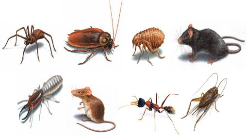 How to do Pest Control Effectively in Singapore?