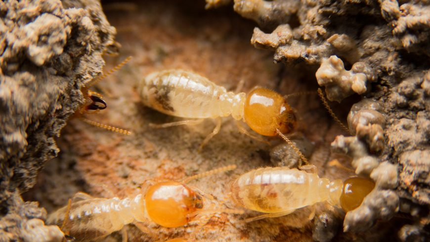 What Should You Do if You Suspect a Termite Infestation?