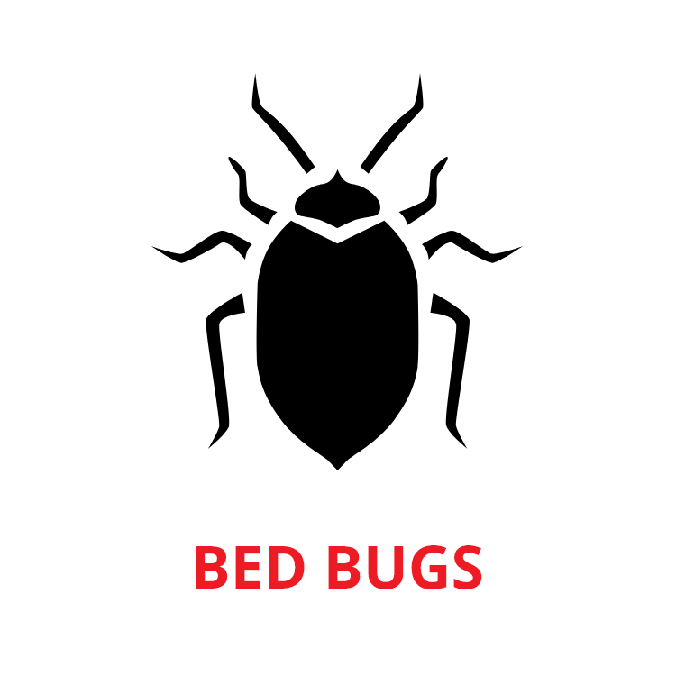 bed bugs control Singapore